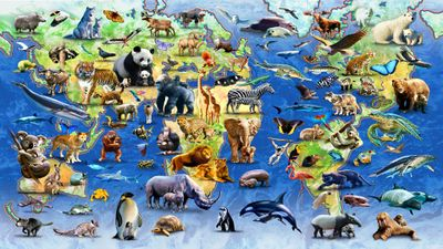 World Map Of Endangered Species - Buy World Map,Map ... |Endangered Animals Map